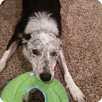 Adopt A Pet :: Johnny (Torque) - WAterford, WI