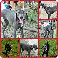 Adopt A Pet :: Daisy Mae - Inverness, FL