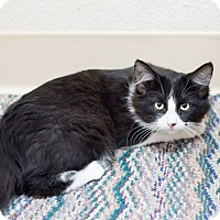 Adopt A Pet :: Koa - Fountain Hills, AZ