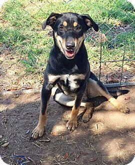 Shepherd (Unknown Type) Mix Dog for adoption in Mesa, Arizona - LEYSA