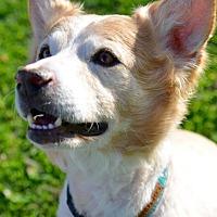 Adopt A Pet :: Davey - Culver City, CA