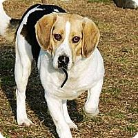 Adopt A Pet :: Cranberry - Ridgely, MD