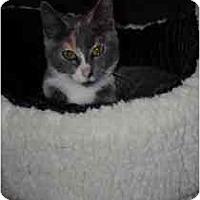 Adopt A Pet :: Frida - Marietta, GA