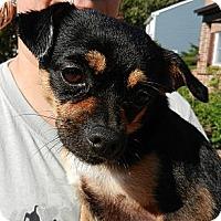 Adopt A Pet :: Chico - South Jersey, NJ