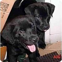 Adopt A Pet :: DANNY - dewey, AZ