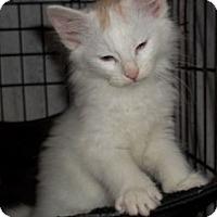 Adopt A Pet :: Spencer - Acme, PA