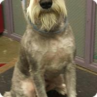 Adopt A Pet :: Blueberry - Phoenix, AZ