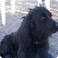 Adopt A Pet :: Bo - Arenas Valley, NM