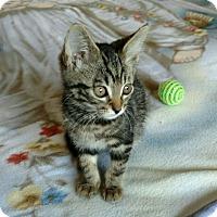 Adopt A Pet :: Sherlock Holmes - Monroe, NC