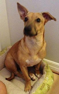 Terrier (Unknown Type, Medium) Mix Dog for adoption in West Palm Beach, Florida - Gwen