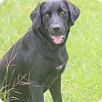 Adopt A Pet :: Cooper - Jay, NY