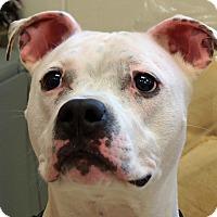 Adopt A Pet :: Kane - Sprakers, NY
