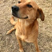 Adopt A Pet :: Rusty - Clarksdale, MS