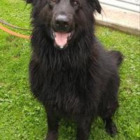 Adopt A Pet :: Ralph - Canastota, NY