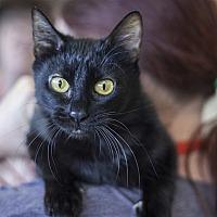 Adopt A Pet :: Little Momma - Napa, CA