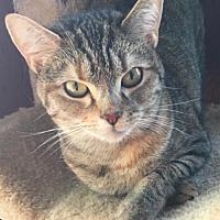 Adopt A Pet :: Sophia - Burlington, WA