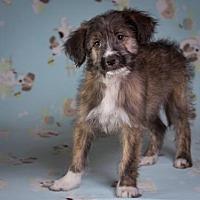 Adopt A Pet :: Pinky - League City, TX