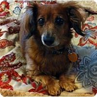 Adopt A Pet :: Winnie - San Jose, CA