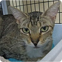 Adopt A Pet :: Rio - Deerfield Beach, FL