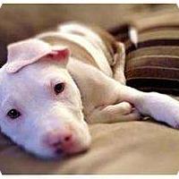 Adopt A Pet :: Zulu - Rochester, NY