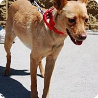 Adopt A Pet :: Cadette - Gilbert, AZ
