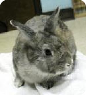 Dwarf Mix for adoption in Maple Shade, New Jersey - Finn