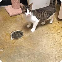 Adopt A Pet :: Yaeger - McDonough, GA