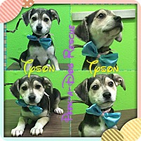 Adopt A Pet :: Tyson - South Gate, CA
