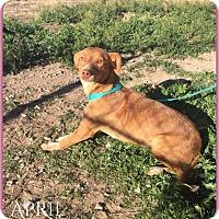 Adopt A Pet :: April - DeForest, WI