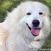 Adopt A Pet :: Wanda in NY - Beacon, NY