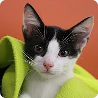 Adopt A Pet :: Jean-Claude - Sarasota, FL