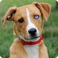 Adopt A Pet :: Bacari - Harrison, NY