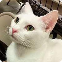 Adopt A Pet :: Orah - Hallandale, FL