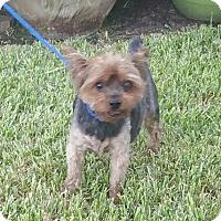 Adopt A Pet :: PAXIL - Houston, TX
