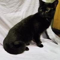Adopt A Pet :: Mira - Twinsburg, OH
