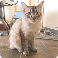 Adopt A Pet :: Regal - Ridgway, CO