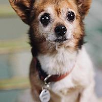 Adopt A Pet :: Warrior - Portland, OR