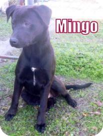 Labrador Retriever Mix Dog for adoption in Georgetown, South Carolina - Mingo