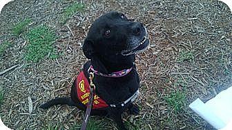 Retriever (Unknown Type) Mix Dog for adoption in Bergheim, Texas - Gabbie