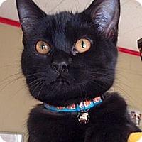 Adopt A Pet :: Clover - Green Bay, WI