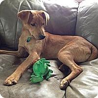 Adopt A Pet :: Marcus! - Hancock, MI