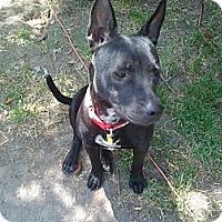 Adopt A Pet :: Autumn,amazing girl - Sacramento, CA