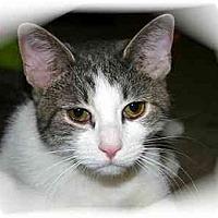 Adopt A Pet :: Gabby - Montgomery, IL