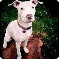 Adopt A Pet :: Sparrow - Rowlett, TX