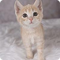 Adopt A Pet :: Donald - Eagan, MN