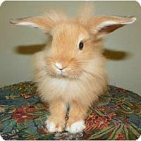 Adopt A Pet :: Suki - North Gower, ON