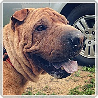Adopt A Pet :: OLIVER QUEEN the best pei ever - Durham, NH