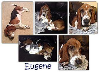 Basset Hound Mix Dog for adoption in Marietta, Georgia - Eugene