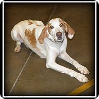 Adopt A Pet :: Boone - Indian Trail, NC