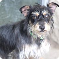 Adopt A Pet :: Fred - Norwalk, CT